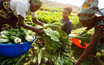 The transformative force and potential of agriculture to attain the Sustainable Development Goals in Agenda 2030; focus on eliminating hunger